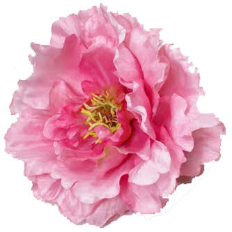 many beautiful flowers are blooming particularly peonies the peak season for peonies is april may and june just in time - How To Cut Peonies