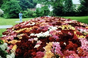 The worlds biggest flower bouquet
