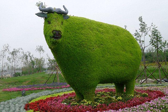 Bull Topairy