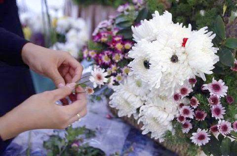 floral puppy