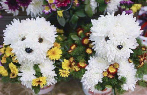floral puppies