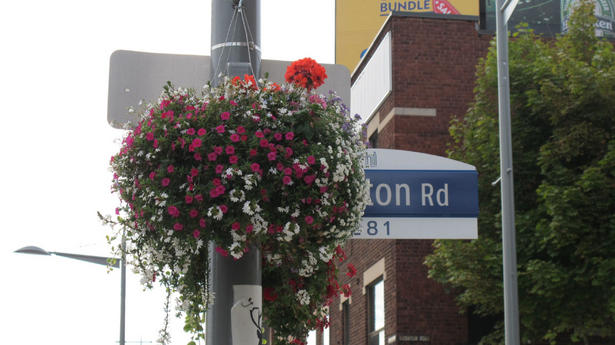 flowers obstruct street signs in Toronto