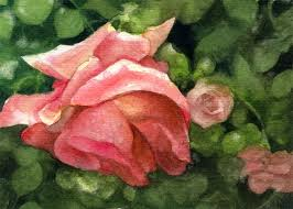 Discoloured Rose