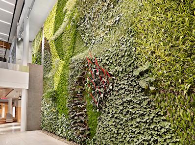 EIA Living Wall
