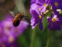 Flower Cells have sticky coating for bees!