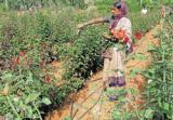 India Flower Farm