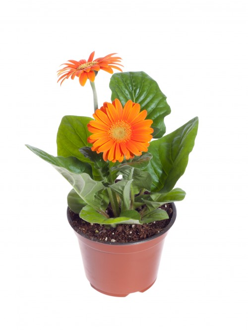 The 5 Best Air Purifying Plants to Grow in Your Home | Grower ...