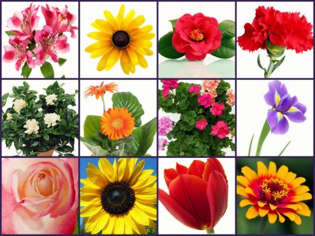 Whats the difference between annual and perennial flowers grower flowers mightylinksfo