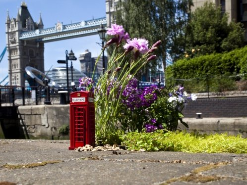 PhoneBox Pothole Garden by the Pothole Gardener