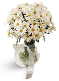 Grower Direct Fresh Cut Flowers Smiling Daisies Bouquet