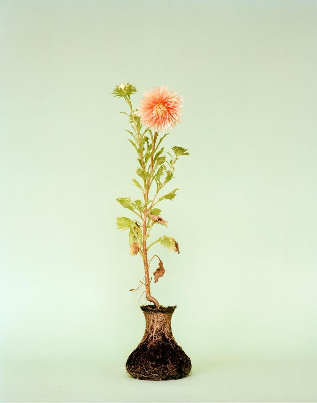 Flower Arrangements that Don't Need Vases