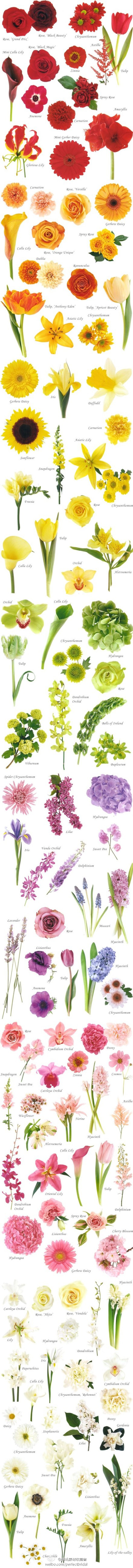 flower chart, by colour