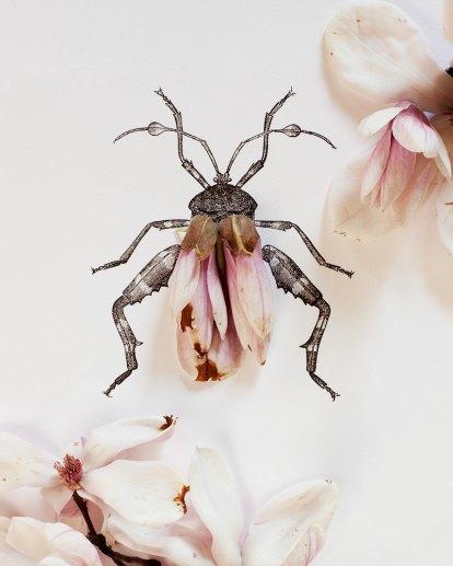 kari herer- bug