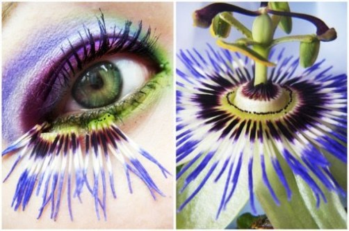passion flower eye makeup