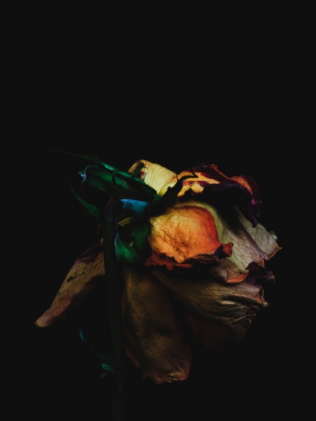 """billy kidd's """"decaying flowers"""" photography"""
