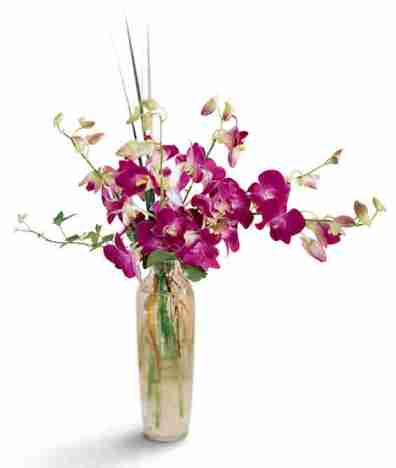 Divine Orchids Arrangement from Grower Direct Fresh Cut Flowers