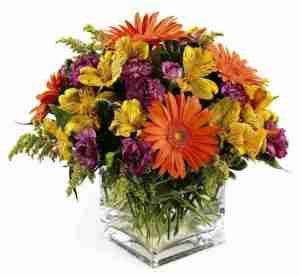 Wish them Well Bouquet from Grower Direct Fresh Cut flowers