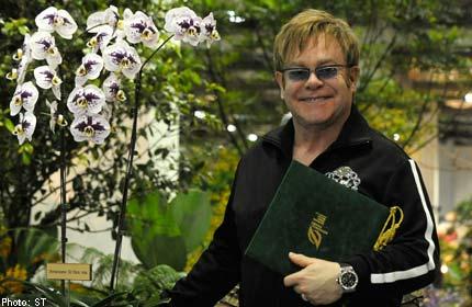 elton john orchid