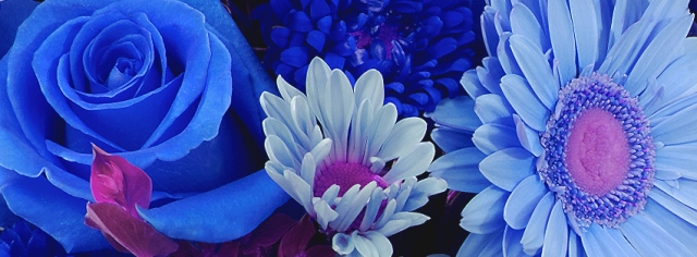 Facebook Covers for Flower Lovers!