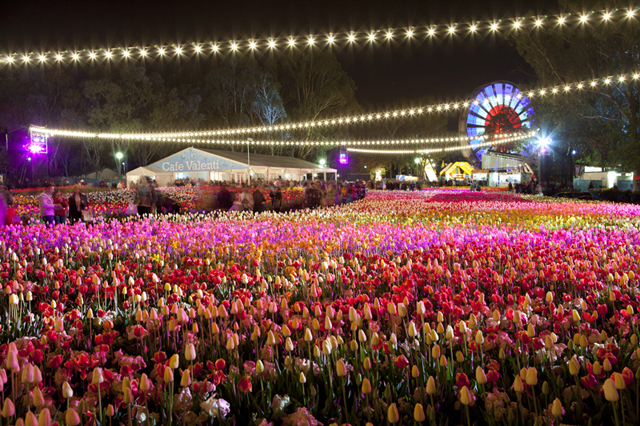 floriade at night 2012