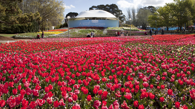 tulips at Floriade 2012