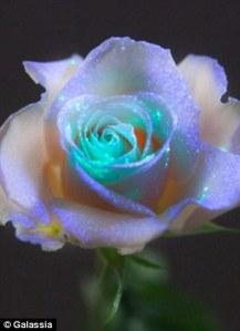 galassia rose, glow in the dark rose