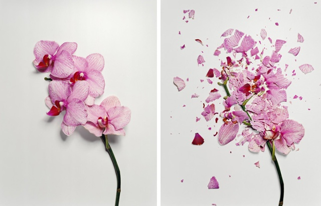 broken-flowers-Jon-Shireman orchids