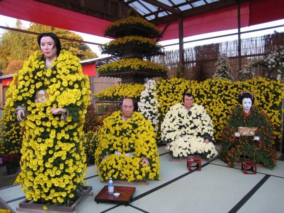 kasmara chrysanthemum festival