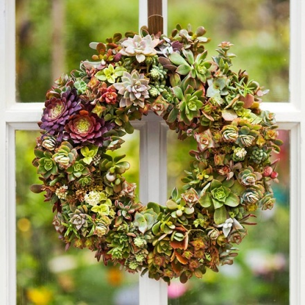 Christmas wreath made from succulents