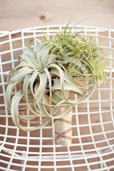 Air Plant Wedding Bouquet