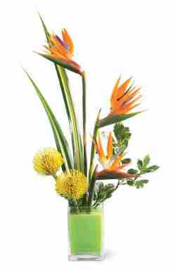 Tropical Delight Arrangement from Grower Direct Fresh Cut Flowers