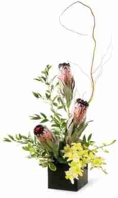 Island Dreams Arrangement from Grower Direct Fresh Cut Flowers