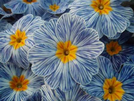 2013 New Flower Varieties: Primula Blue Zebra