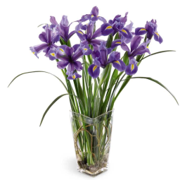 Iries from Grower Direct Fresh Cut flowers