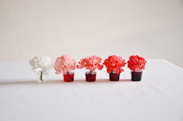 white carnations dyed shades of red
