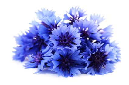 fun flower facts cornflower centaurea grower direct fresh cut flowers presents. Black Bedroom Furniture Sets. Home Design Ideas