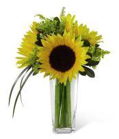 Sunflowers from GrowerDirect.com