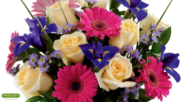 June 2013 desktop calendar with roses, Gerbera daisies, irises