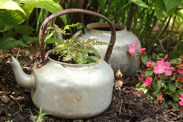 container gardening-kettle