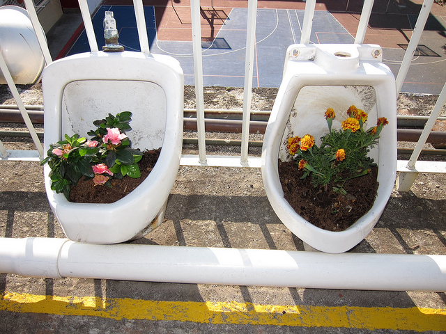container gardening- urinal planter