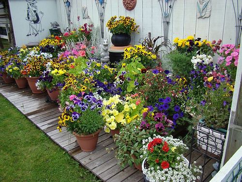 Container Gardening  in a backyard