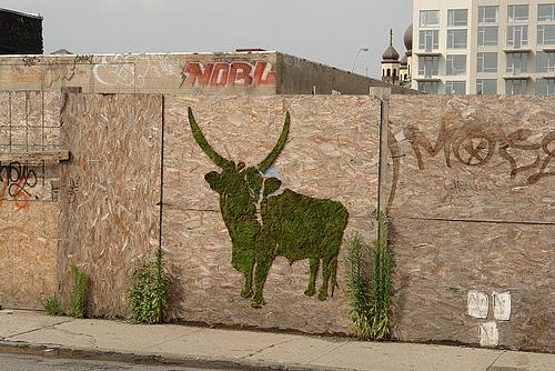 moss graffiti on a wall