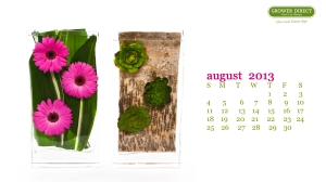 Gerbera Daisies and Succulents desktop wallpaper August 2013