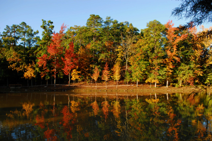 The Best Places To See Fall Foliage In Canada Grower
