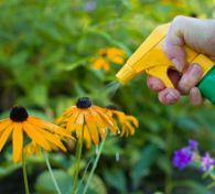 fertilize flowers