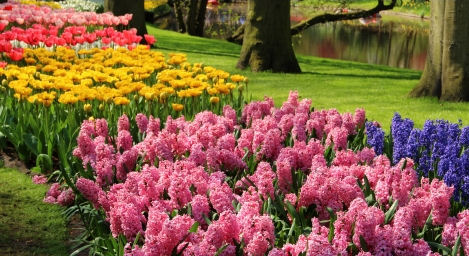 mono flower garden