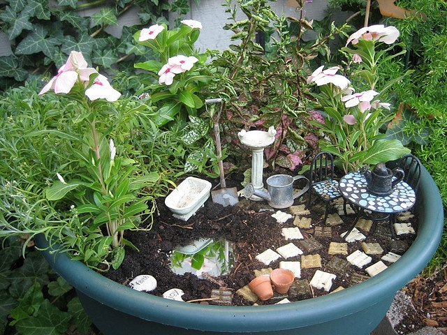 New Trend Alert: Fairy Gardens | Grower Direct Fresh Cut ...
