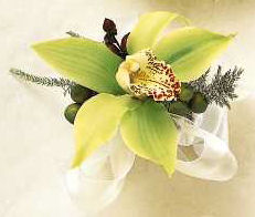 Wear a green cymbidium orchid in your hair!
