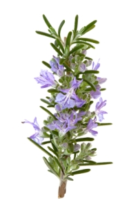 Rosemary Herb Flowers